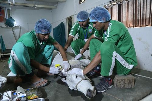 Cow Hospital  | G.S.D Animal Hospital