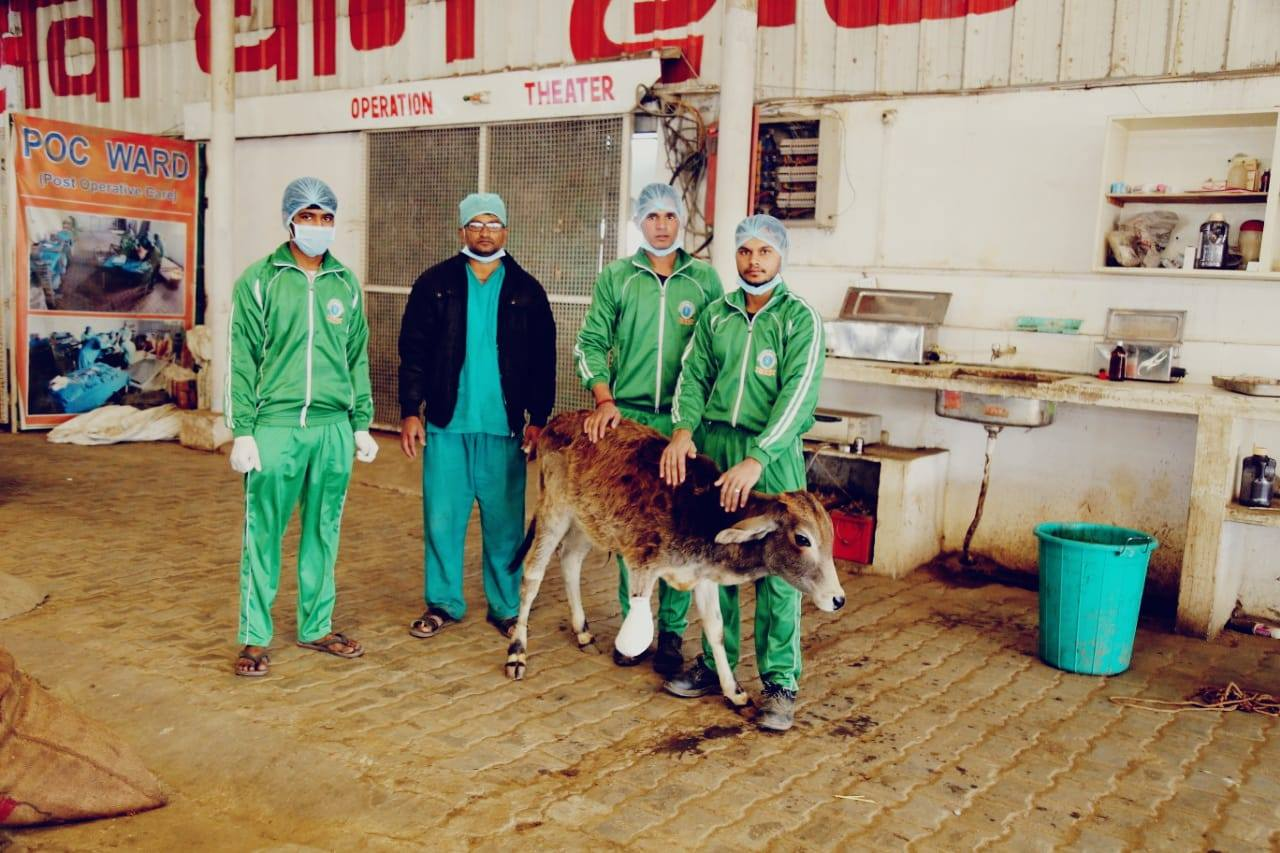 Amputation of Calf
